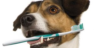 טיפולי שיניים לחיות