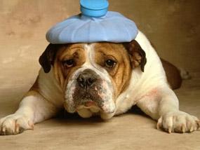 מכת חום אצל כלבים
