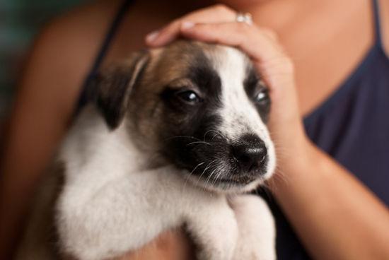 טיפול בגורים