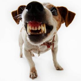 מה ידוע לך על השיניים של חיית המחמד שלך?