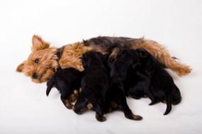 טיפול בכלבה הממליטה